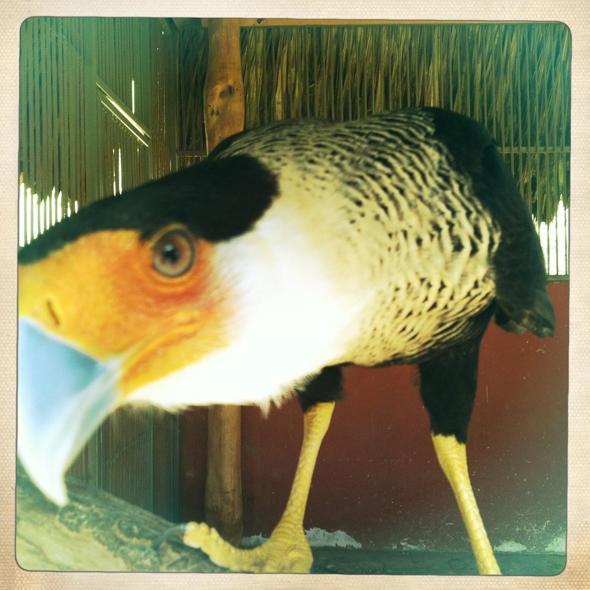 exotic bird in enclosure at animal garden
