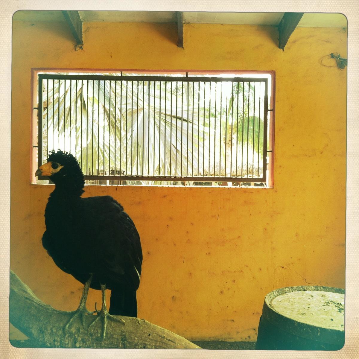 photo of exotic bird in enclosure at animal garden